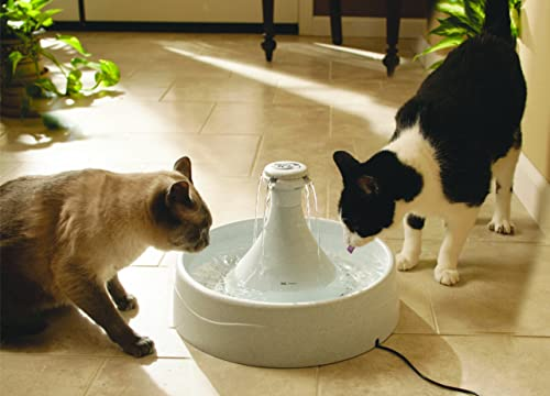 best dog water fountain reviews